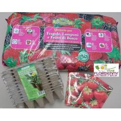KIT SEMENZAIO FRAGOLE SEMI E PIANTINE piante semina seme orto fiori FRAGOLINE