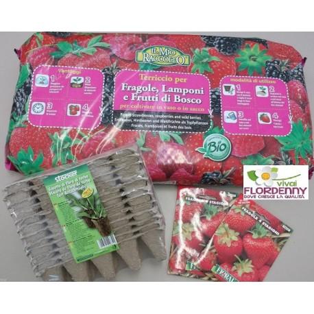 Kit semenzaio fragole semi e piantine for Piantine orto prezzi