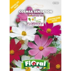 FIORAL SEMI DI CORIANDOLO aromatiche aromatica officinale giardino pianta