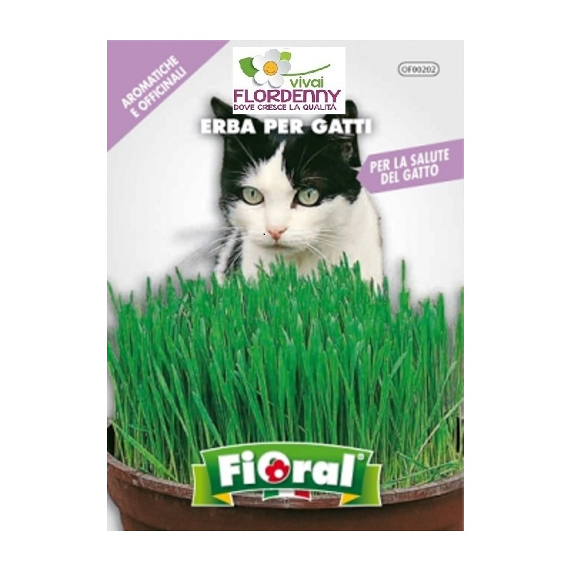 Fioral semi di erba per gatti erba gatta oasi felina for Erba per gatti