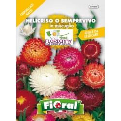 Fioral semi di fiori di carta helicriso mix fiori sementi for Semi di fiori