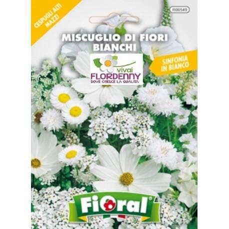 Fioral semi di fiori bianchi mix fiori sementi giardino for Semi di fiori