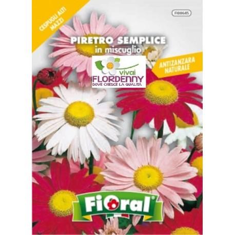 FIORAL SEMI DI PHYSALIS ALCHECHENGI fiori sementi giardino aiuola piante