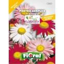 FIORAL SEMI DI PIRETRO SEMPLICE MIX fiori sementi giardino aiuola piante