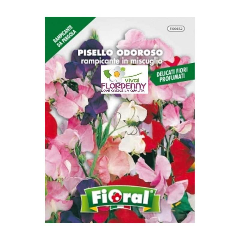 Fioral semi di pisello odoroso ramp mix fiori sementi for Vendita semi fiori