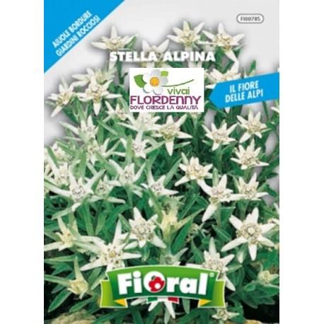 FIORAL SEMI DI STATICE SINUATA MIX fiori sementi giardino aiuola piante