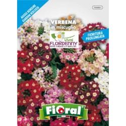 FIORAL SEMI DI EDELWEISS STELLA ALPINA fiori sementi giardino aiuola piante