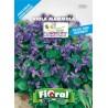 FIORAL SEMI DI VIOLA DEL PENSIERO IN MIX fiori sementi giardino aiuola piante