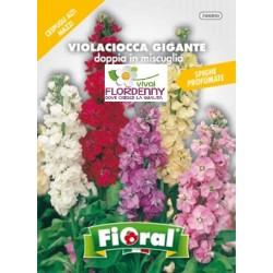 FIORAL SEMI DI VIOLA MAMMOLA VIOLETTA fiori sementi giardino aiuola piante