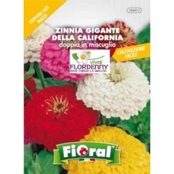 FIORAL SEMI DI VIOLACIOCCA DOPPIA ALTA MIX fiori sementi giardino aiuola piante