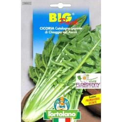 BIG PACK CICORIA CATALOGNA GIGANTE SEMI L'ORTOLANO orto sementi seme ortolano ortaggio