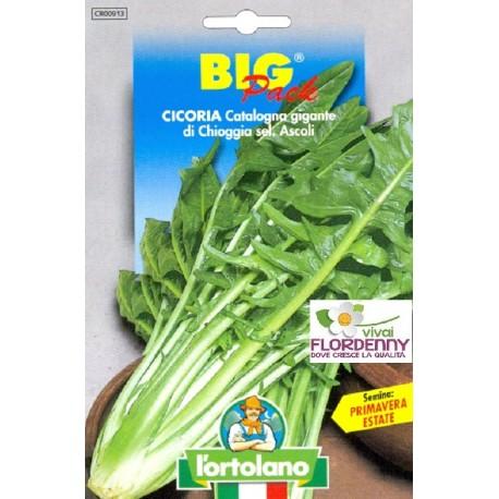 BIG PACK CETRIOLO MARKETMORE SEMI L'ORTOLANO orto sementi seme ortolano ortaggio