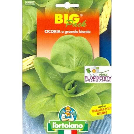 BIG PACK CICORIA RADICCHIO VARIEGATO DI CHIOGGIA SEMI L'ORTOLANO orto sementi seme ortolano ortaggio