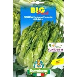 BIG PACK CICORIA RADICCHIO PAN DI ZUCCHERO SEMI L'ORTOLANO orto sementi seme ortolano ortaggio