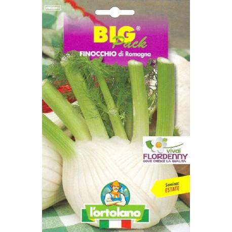 BIG PACK FAVA AGUADULCE SUPERSIMONIA SEMI L'ORTOLANO orto sementi seme ortolano ortaggio
