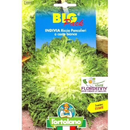 BIG PACK INDIVIA SCAROLA CORNETTO SEMI L'ORTOLANO orto sementi seme ortolano ortaggio