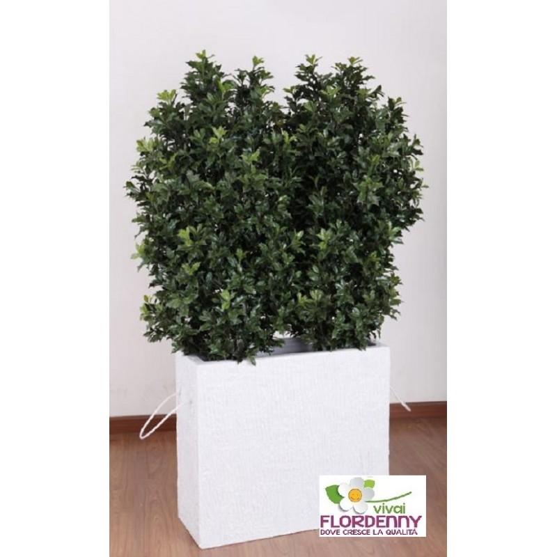piante per esterno resistenti