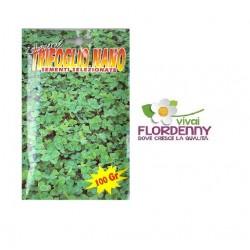 PRATO SEMI DICHONDRA REPENS BOTTOS 100g prati tappeto erboso semente erba semi giardino