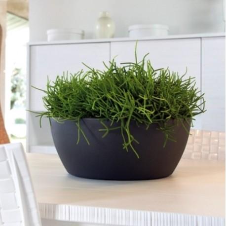 NICOLI CIOTOLA THETIS 50 vasi resina vaso arredamento piante giardi...