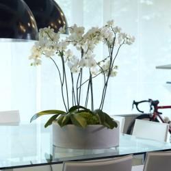 NICOLI CIOTOLA ZOE 50 vasi resina vaso arredamento piante giardino terrazzo