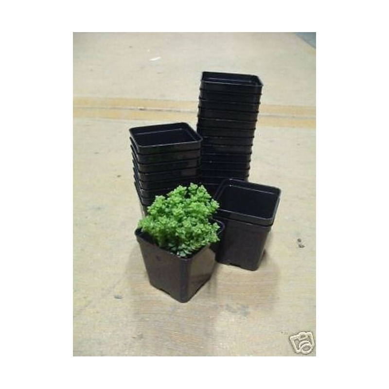 Vasi In Plastica Da Giardino.Arca Kit 24 Vasi Cm 7x7 Art120 Fioriere Vasi Balcone Giardino Piant