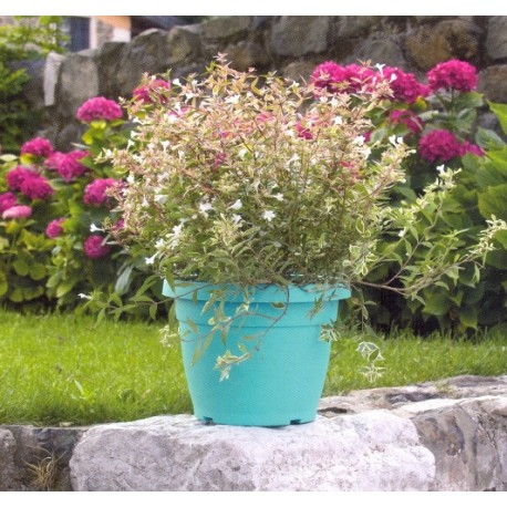 Nicoli domus vaso campana sottovaso cm35 portafioriere for Vasi nicoli