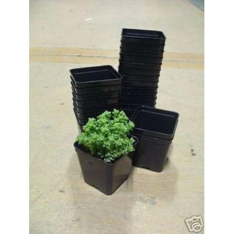 Fioriere In Plastica Per Balconi.Arca Kit 15 Vasi Cm 10x10 Art120 Fioriere Vasi Balcone Giardino Pia