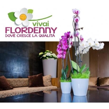 Veca vaso coprivaso living 11cm casa arredo giardino fiori for Vasi da arredo