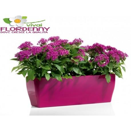Veca vaschetta living 26x13cm casa arredo giardino fiori piante orc - Happy casa arredo giardino ...