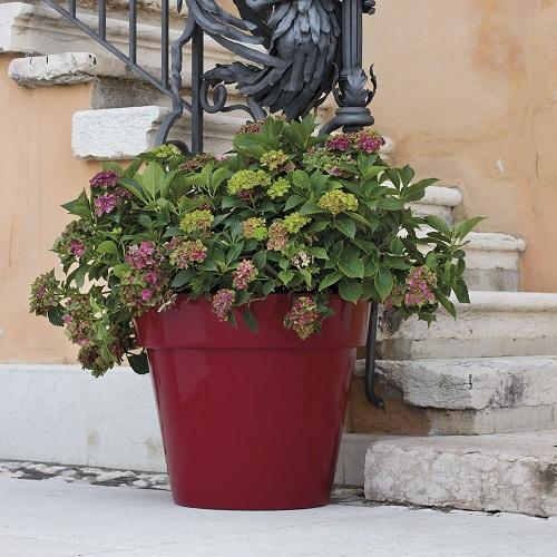 vasa-grande-per_piante-zeus.jpg