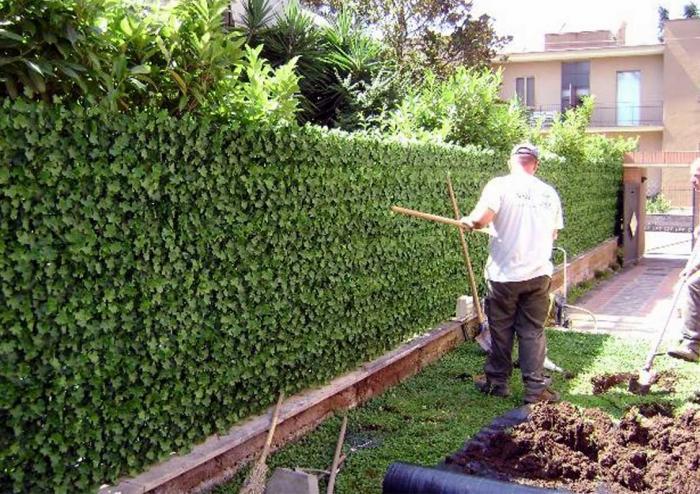 Viridium siepe artificiale photinia 50x50 recinto - Giardino artificiale ...